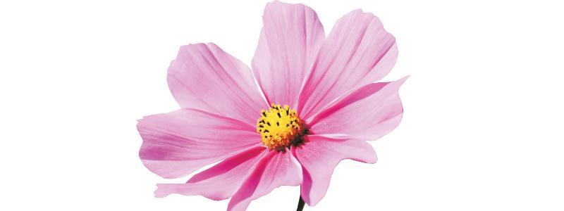 Maranello in fiore